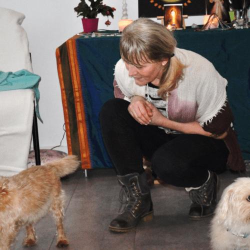 Kleiner-Hund-Atlas-gerade-Rückenschmerzen