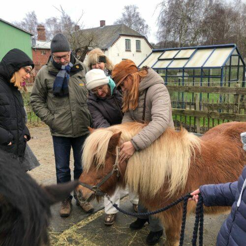 Pferde-Braun-Behandlung-Kopf-Mähne-e1564430345560