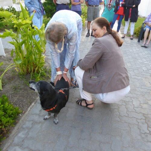 Schwarzer-Hund-Klein-Rückenschmerzen