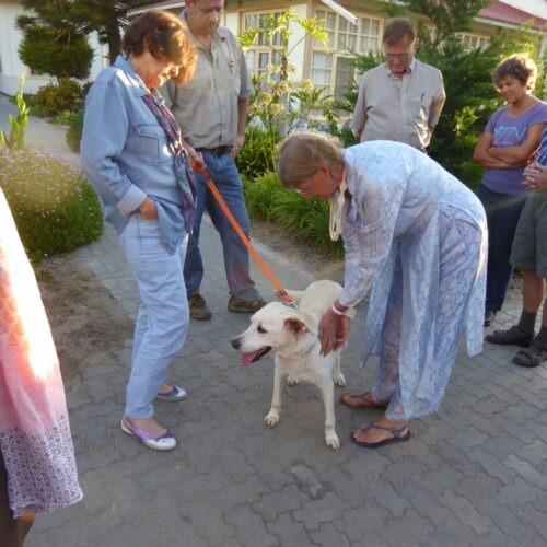 Weißer-Hund-Atlas-Korrektur